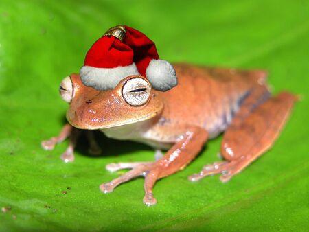 Christmas frog Standard-Bild