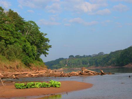 Amazon rainforest scenery - Peru Standard-Bild