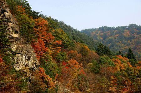 Autumn mountainside in Korea Standard-Bild