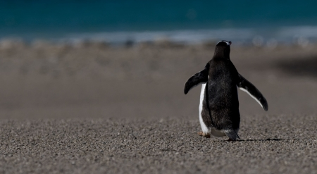 walk away: Torna pinguino di camminare Archivio Fotografico