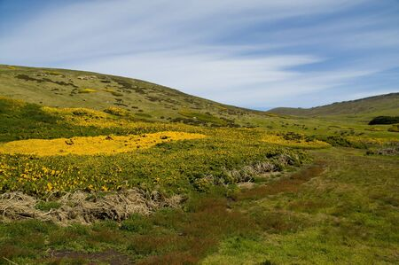 carcass: Carcass Island Hill - Falkland Islands