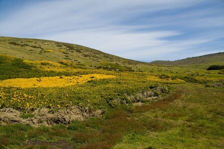 carcass: Karkas Island Hill - Falklandeilanden Stockfoto