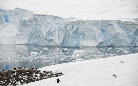 penguin colony: Antarctic landscape with gentoo penguin colony - Neko Harbor Stock Photo