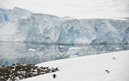pinguinera: Paisaje ant�rtico con la colonia de ping�inos Gentoo - Puerto Neko