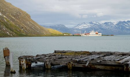 whaling: A wooden pier once serving whalers on their way home from the cold Southern Oceans with their massive catch. This pier at Grytviken has seen a bloody past but now provides a place for seals and birds to rest in peace.