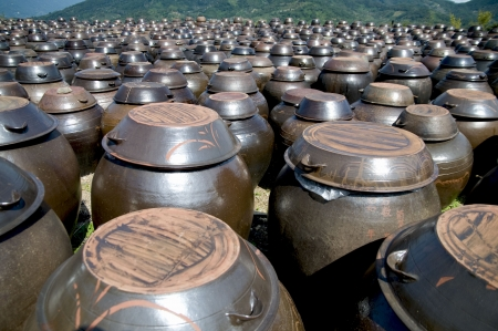 terra cotta: Rows of pots used for the fermentation of Korean foods like Kimchi.