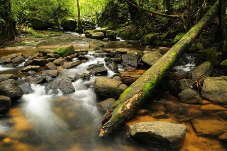 noone: Forest Stream Stock Photo