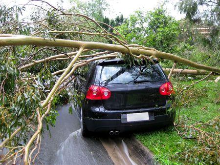 Vista trasera del coche aplastado por un árbol después de un intenso ciclón