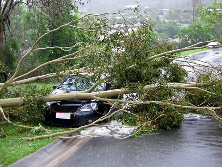 damages: Car crushed by a tree following an intense cyclone