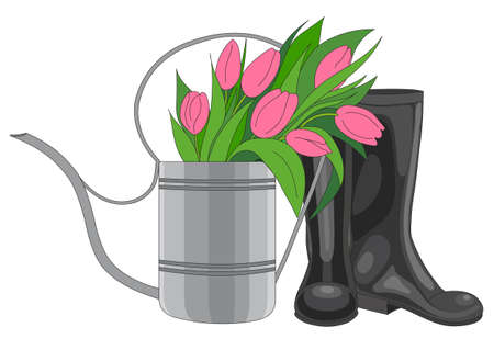 black boots: Vector illustration of a garden watering can. Watering can filled with pink flowers tulips and black boots