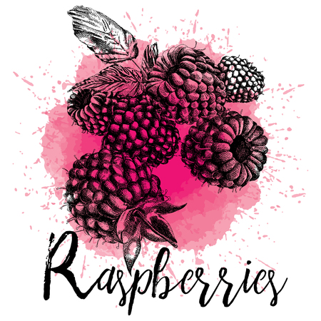 Vector illustration of raspberry in hand-drawn graphics. Forest berry is depicted on a pink watercolor background. Design for packaging of juice or deserets
