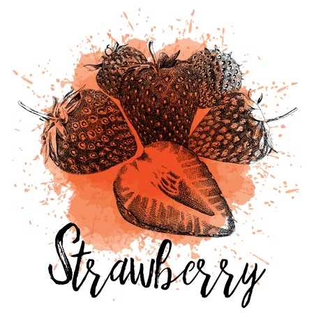 Vector illustration of a strawberry in hand-drawn graphics. The berry is depicted on a red watercolor background. Design for juice packaging or restaurant menu