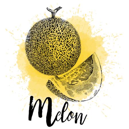メロンのベクトル図は手にグラフィックスを描画します。果実は黄色の水彩背景に描かれています。梱包やレストラン メニューをデザインします。  イラスト・ベクター素材