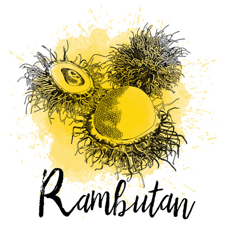 Vector illustration of rambutan in hand-drawn graphics. The fruit is depicted on a yellow watercolor background. Juice Packaging Design