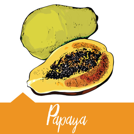 Realistic illustration of papaya in hand drawn graphics, Design for packaging of juice, smoothies or desserts.