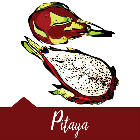 Realistic illustration, pitaya or dragon fruit in hand-drawn graphics, Design for packaging of juice, smoothies or desserts. Illustration