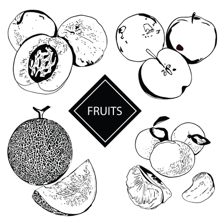 Collection of fruits and berries in hand-drawn graphics. Vector illustration of a peach, apple, melon and mandarin