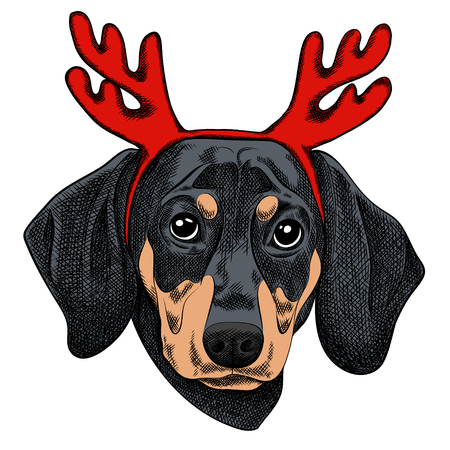 A Vector illustration of a Dachshund dog for a Christmas card. Dachshund with horns of reindeer. Merry Christmas in the year of the dog. New Years Eve 2018 Ilustracja