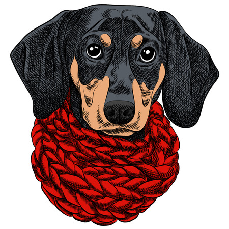 A Vector illustration of a Dachshund dog for a Christmas card. Dachshund with a red knitted warm scarf. Merry Christmas in the year of the dog. New Years Eve 2018 Vettoriali