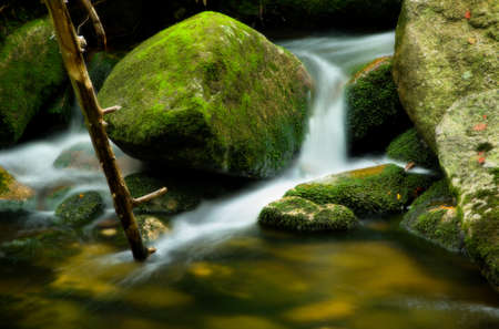 Rivulet detail with big mossy stones and branch photo