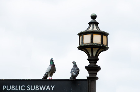 Two pigeons sitting on the street lamp and sign. photo