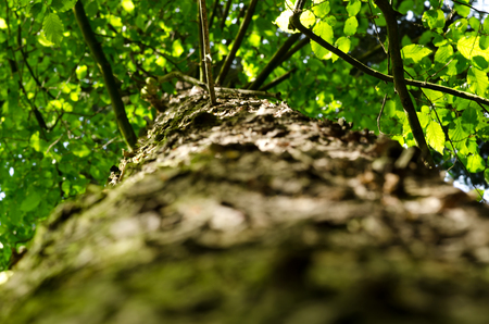 tree trunk: Tree trunk, branches, leaves, agains soft sunlight. Stock Photo