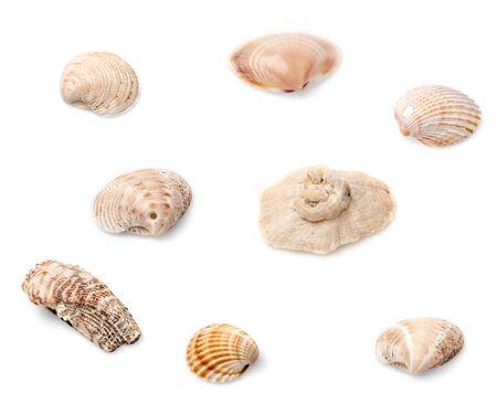 seashell: Set of eight seashells isolated on white background.