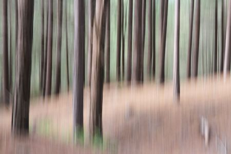 spacial: Pine tree woodland with shapes and textures, natural  blurred abstract background effect.