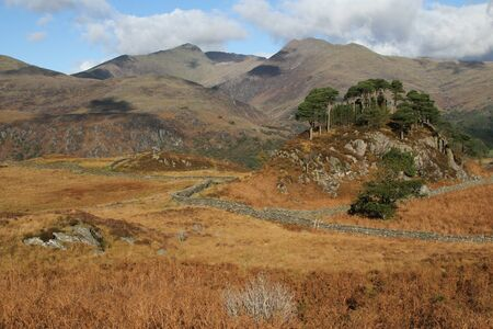 uplands: Mountainous landscape, a hill with Scots pine trees on moorland viewing out towards high mountains.