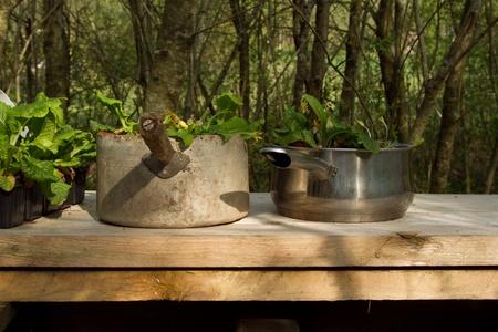 Pentole riciclati da utilizzare come vasi di piante su un tavolo di legno in un giardino con alberi sullo sfondo. Archivio Fotografico - 9490558