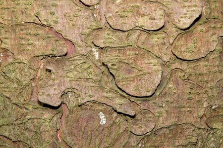 The textured bark of a pine tree with a scaled chip effect. Stock Photo - 10055855
