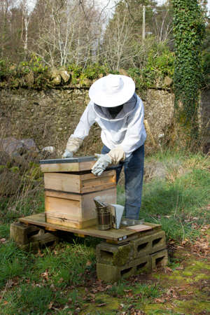 A man dressed in protective clothing lifts a lid off a bee hive with a smoker next to the hive. Stock Photo