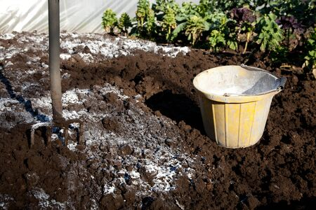A patch of garden dug over showing a fork and bucket of lime and lime spresd over the soil.