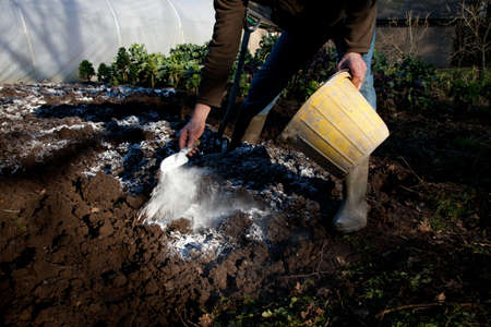 A man stands in a dug over patch of soil with a bucket and trowel sprinkling lime on the earth.