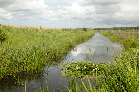 A river cuts through reeds on marshland with a lilly plant and flowers in the foreground. Stock Photo