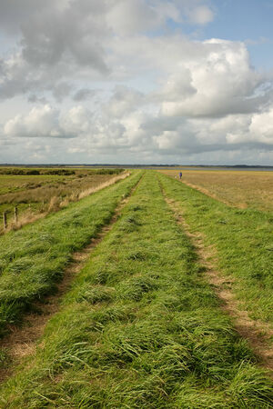 tortillera: Hierba verde enorme y una pista en un dique que atraviesa la regi�n pantanosa con un cielo azul y nubes en la distancia. Foto de archivo