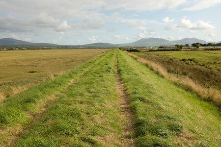 tortillera: Hierba verde enorme y una pista en un dique que atraviesa la regi�n pantanosa con un cielo nublado azul y las monta�as en la distancia.
