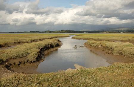 estuary: A stream extends across the marshland of Foryd Bay, Caernarfon, Gwynedd, Wales, UK.
