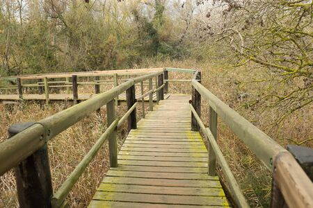 A wooden walkway with hand rails over a reed marsh amongst trees under a grey cloud sky. Stock Photo