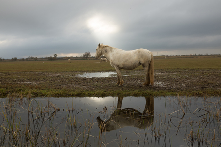 A beam of light back lights a horse in a field and reflects in a pool of water.