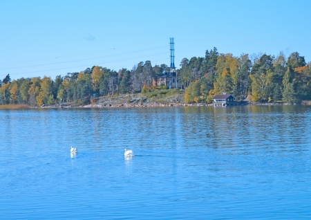 Swans on an autumn pond in the suburb of Helsinki photo