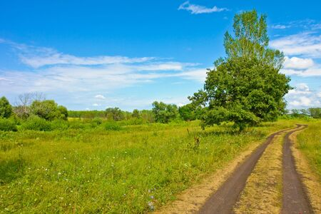 Nature at summer, road, trees, green and sky Standard-Bild