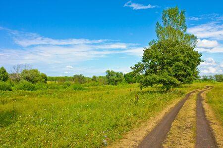Nature at summer, road, trees, green and sky Standard-Bild
