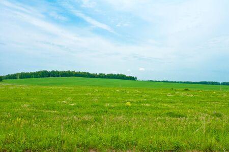 Summer nature, green and sky Standard-Bild