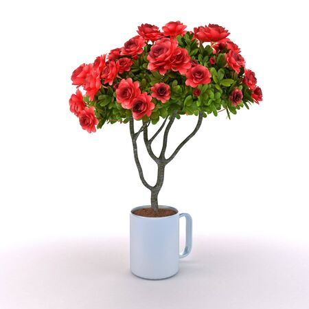 Rosebush grow from cup on white background Standard-Bild