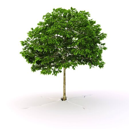 Green tree grow from ground on white background Standard-Bild