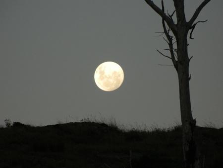 rising dead: African moon rising
