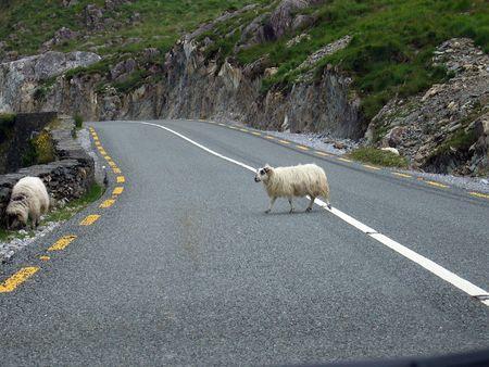 Schapen Crossing the Road