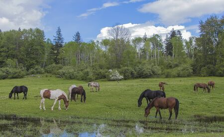 cloudy day: Multiple horses grazing in a field on a partially cloudy day Stock Photo