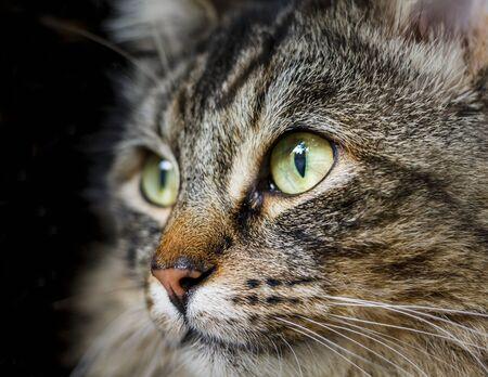 moggy: Cat Close Up